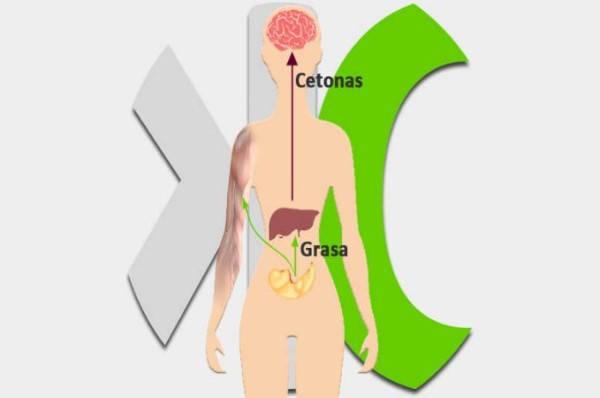 Cómo Saber Si Estoy En Cetosis 2021